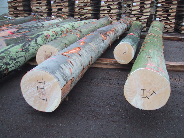 Beech logs - ready for inspection